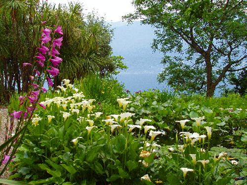 Flores en la Isole di Brissago