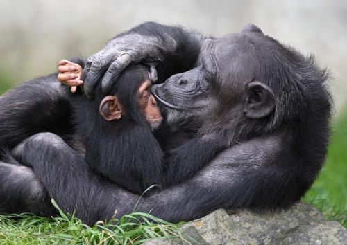 Zoologico Walter, en Gossau
