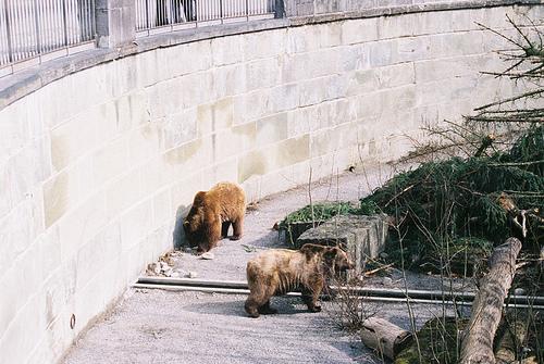 Bärengraben, la fosa de los osos de Berna