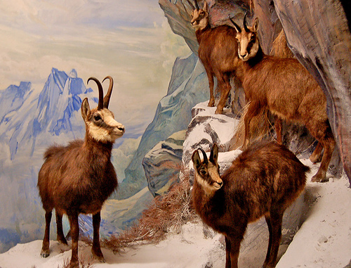 El Museo de Ciencias Naturales de Berna